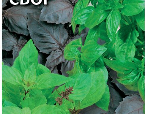 Пряно-ароматические и зелёные